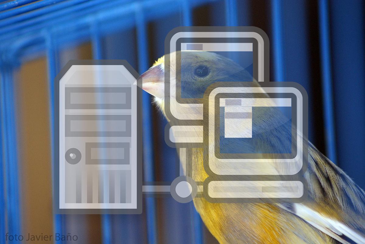 Kanariefågel inom IT-säkerhet